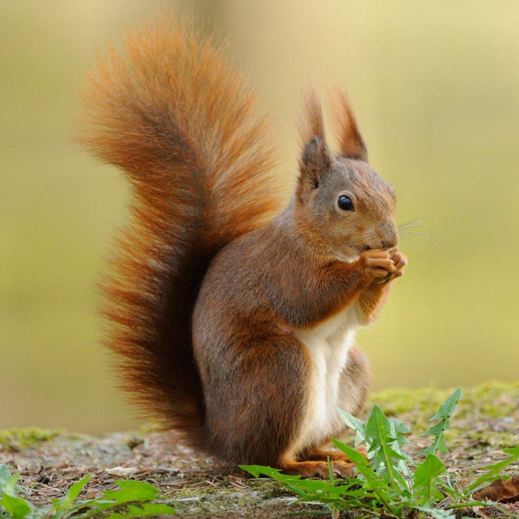 Eichhörnchen lebensraum  für Kinder erklärt