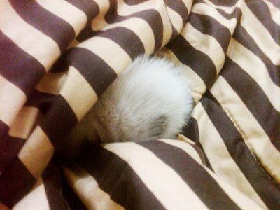 ih, ada yg nyempil di bedcover saya! :))