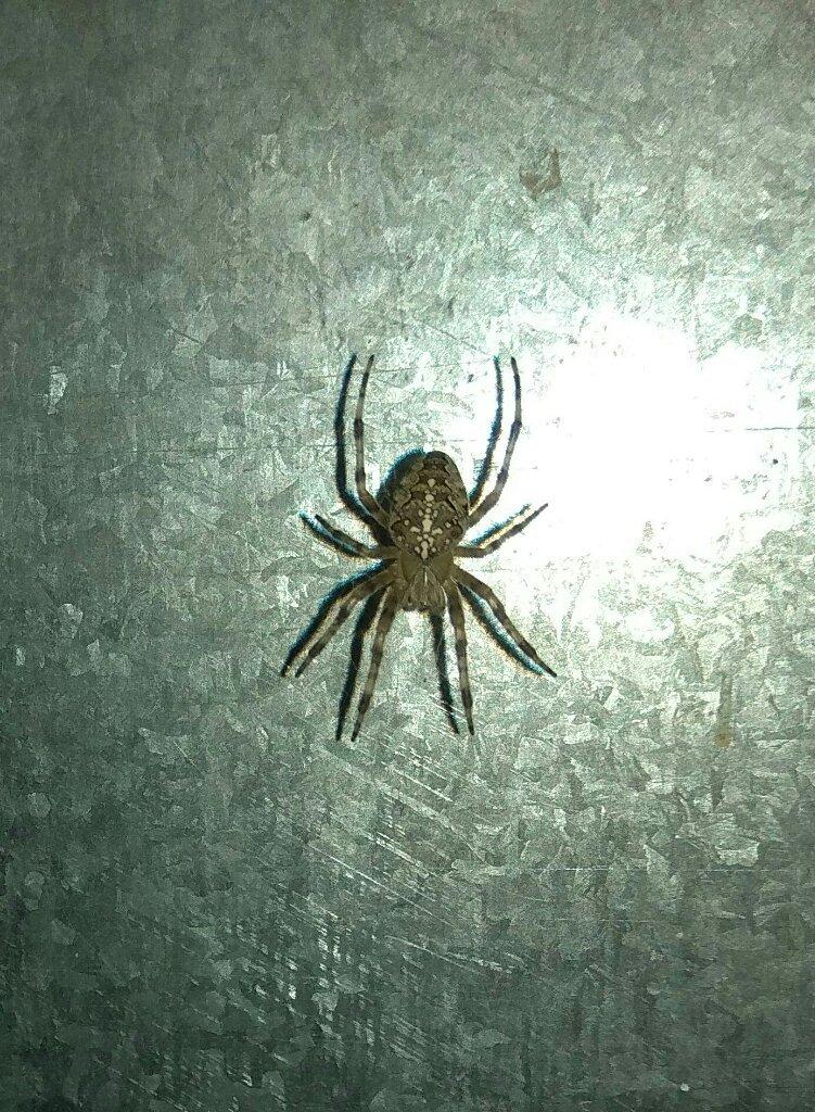 это пауки на балконе фото потолка частном