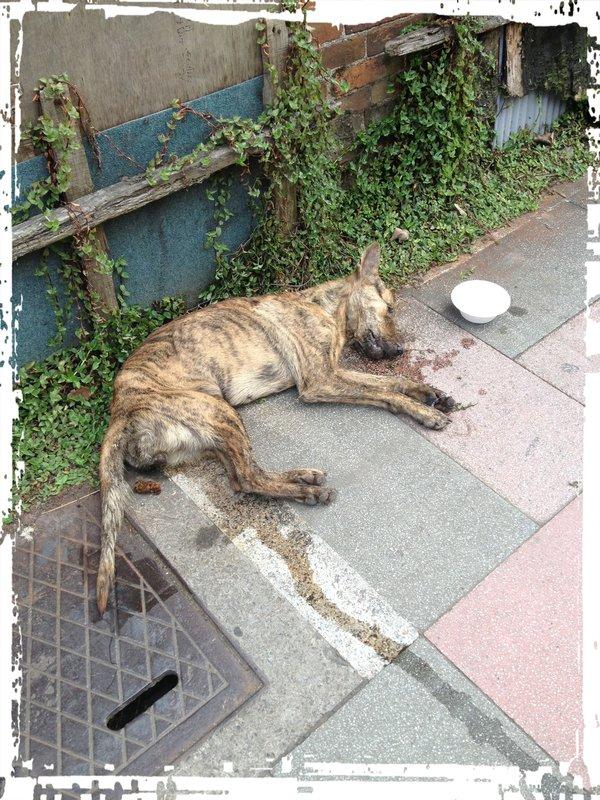 我们在附近要纸箱,想说要把狗狗放到纸箱带去附近的动物医院,但要不