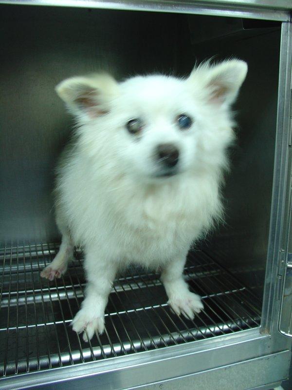 希望大家可以协助帮忙小白狐狸狗找到他的春天!