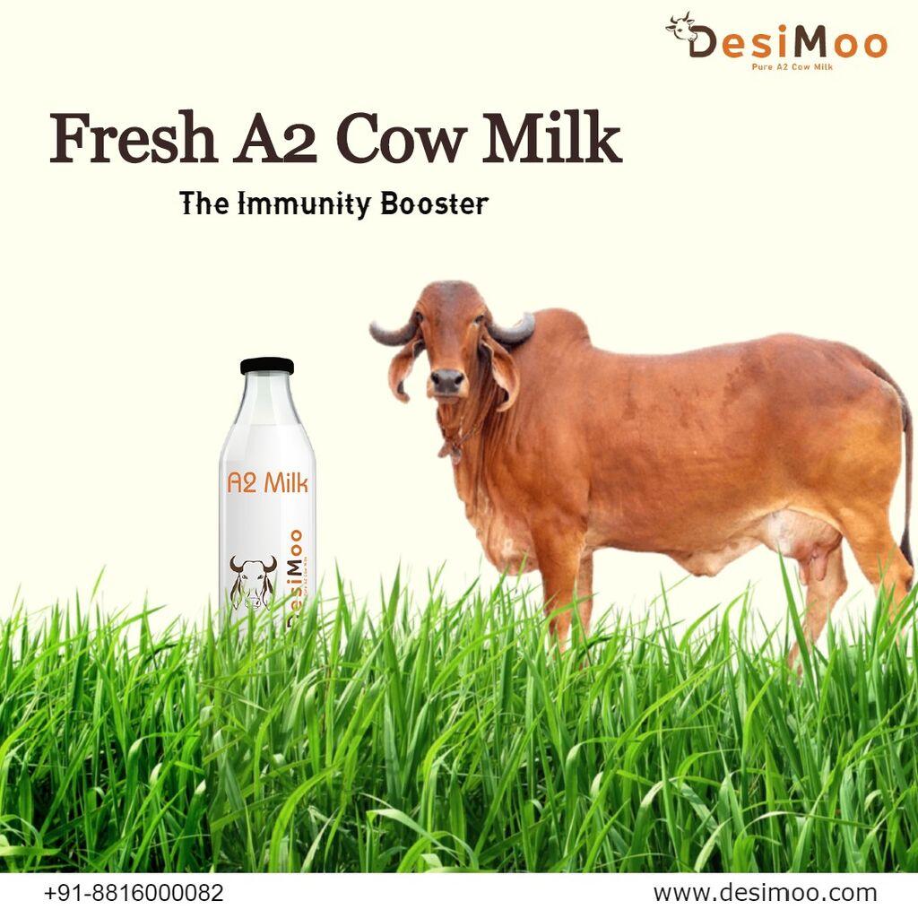 Organic Desi Cow Milk In Gurgaon