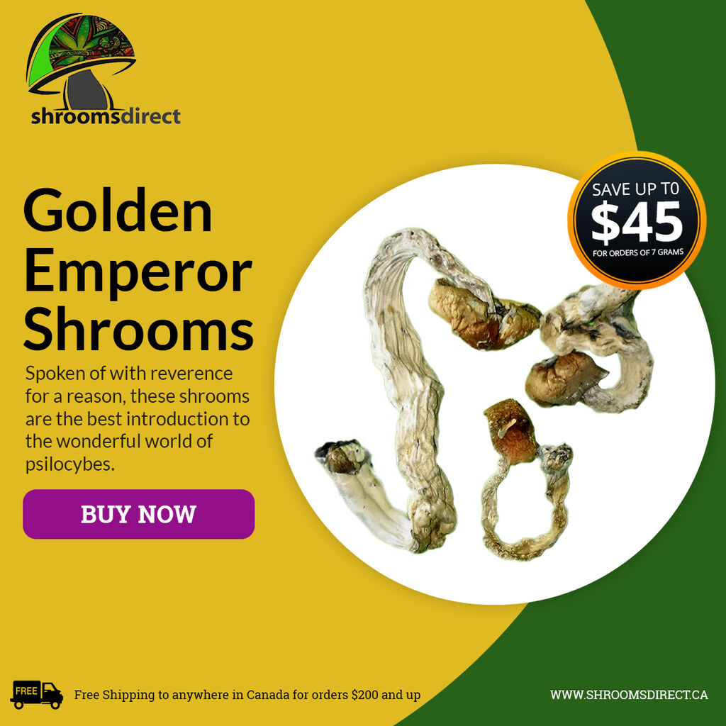 """shroomsdirect - Known as the """"Golden Teacher"""", a gateway shroom for"""
