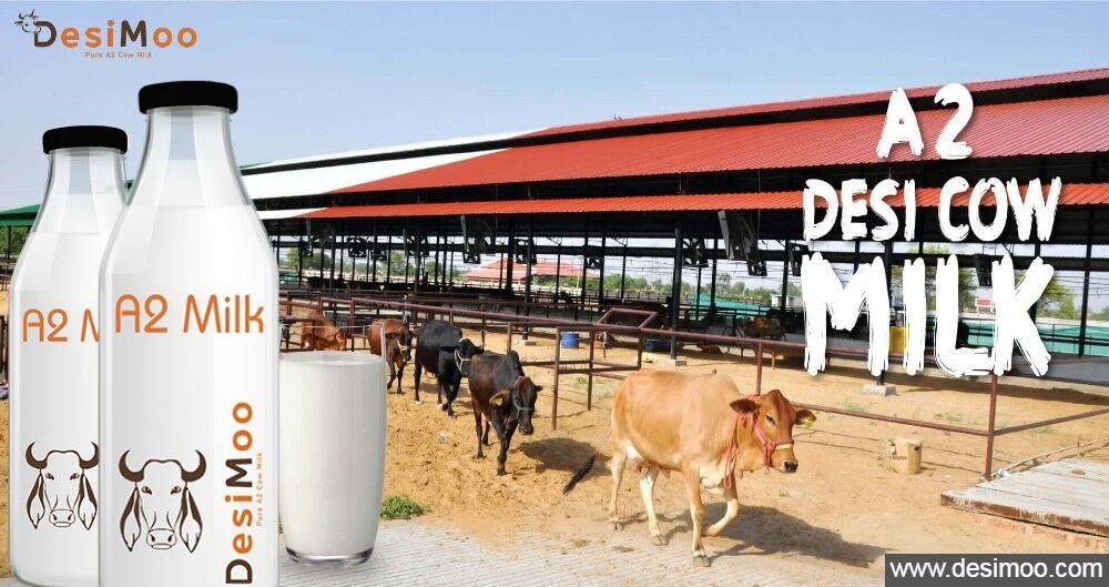 A2 Cow Milk in Gurgaon